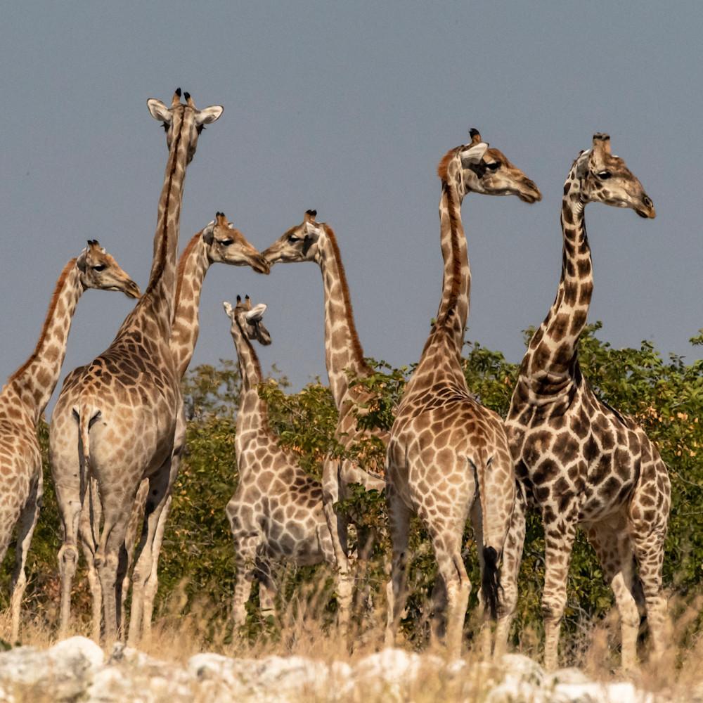 Giraffe tower lbs 9113 an06dk