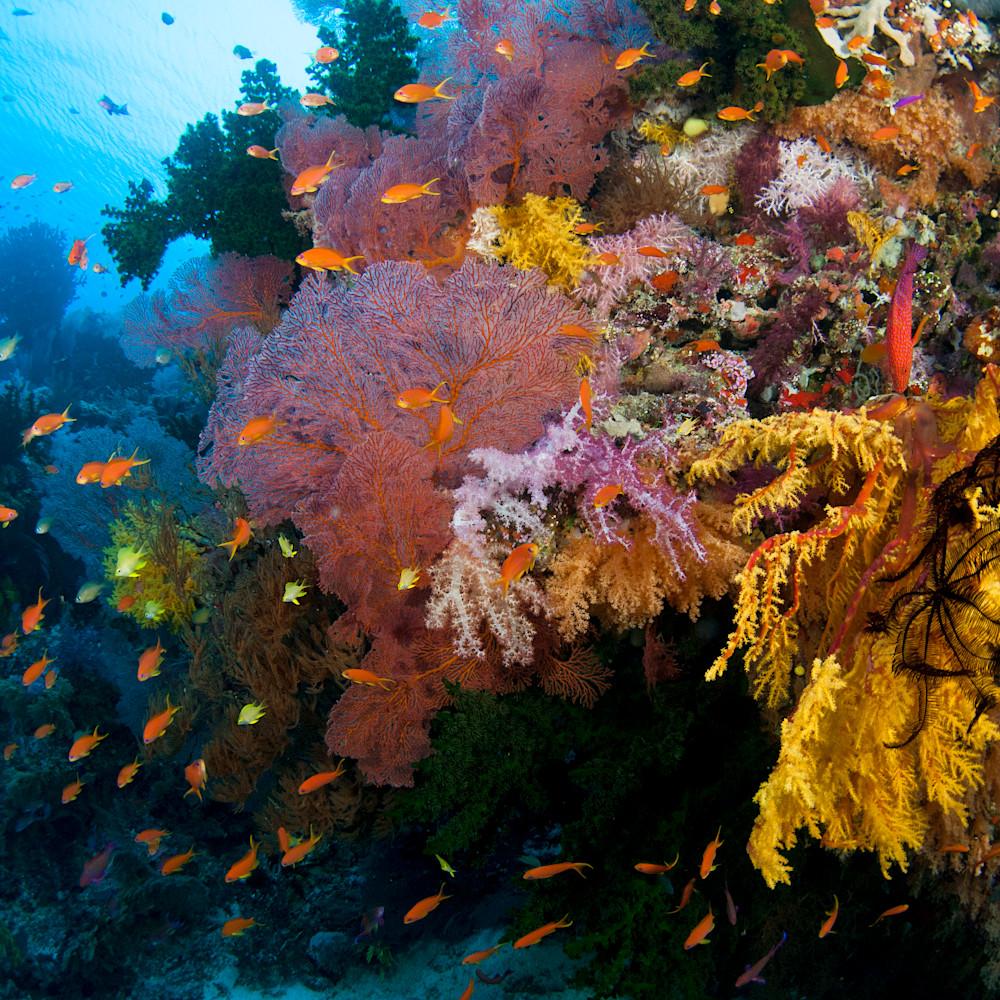 Color beneath the sea qnpjze