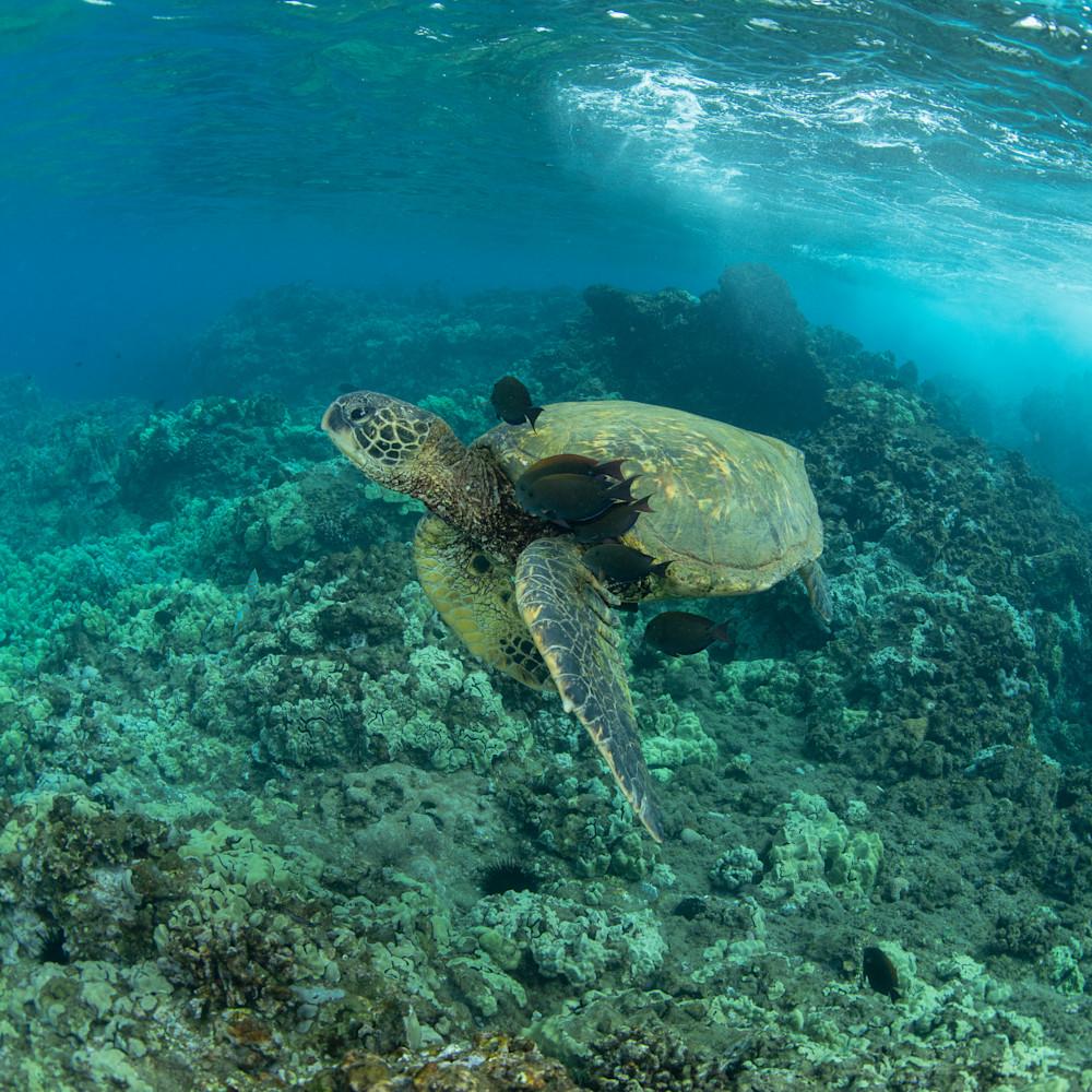 Undersea spa ivy26k