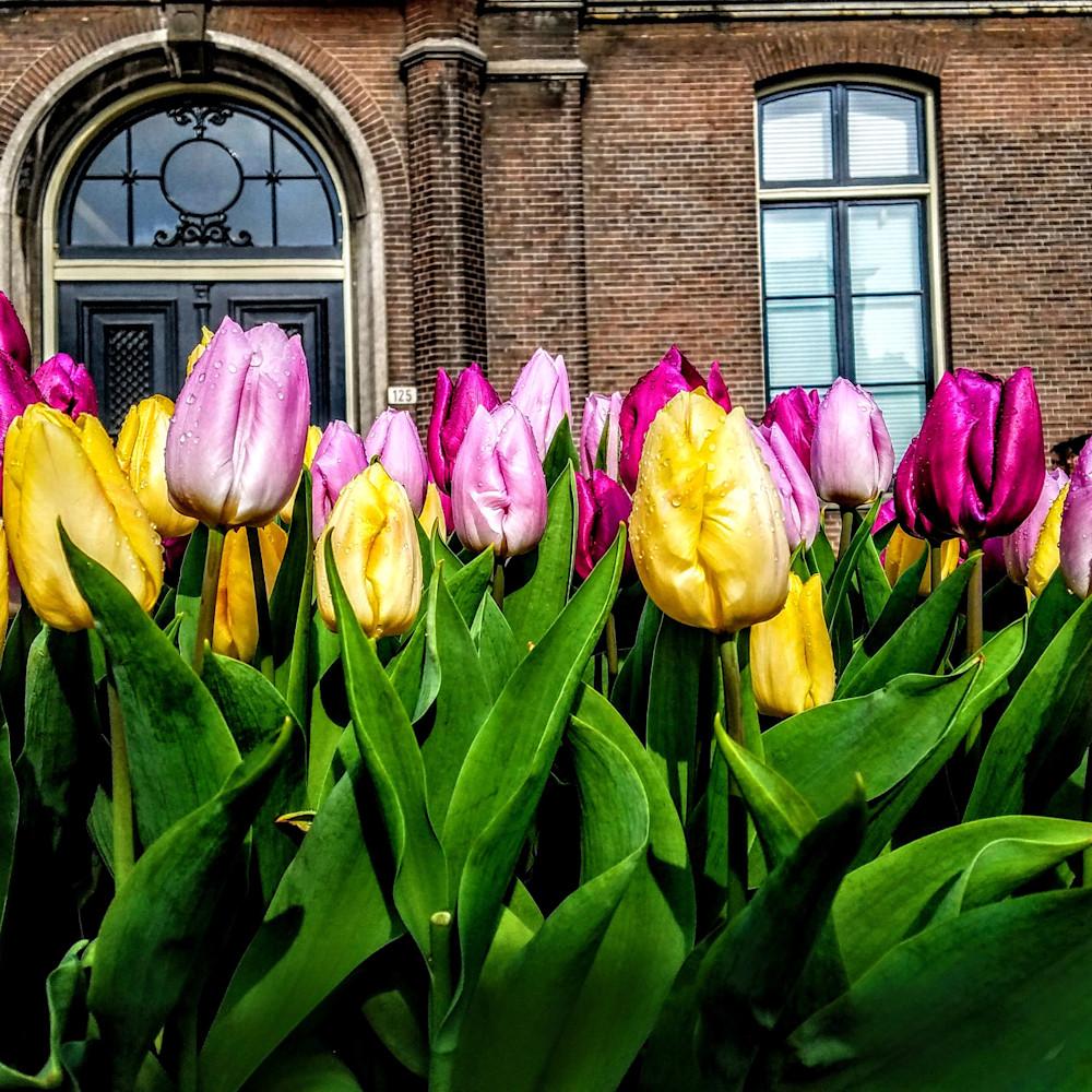 Amsterdamandtulipsnumberonepophighcolorhigh 20180412 170659 001 wjrsul