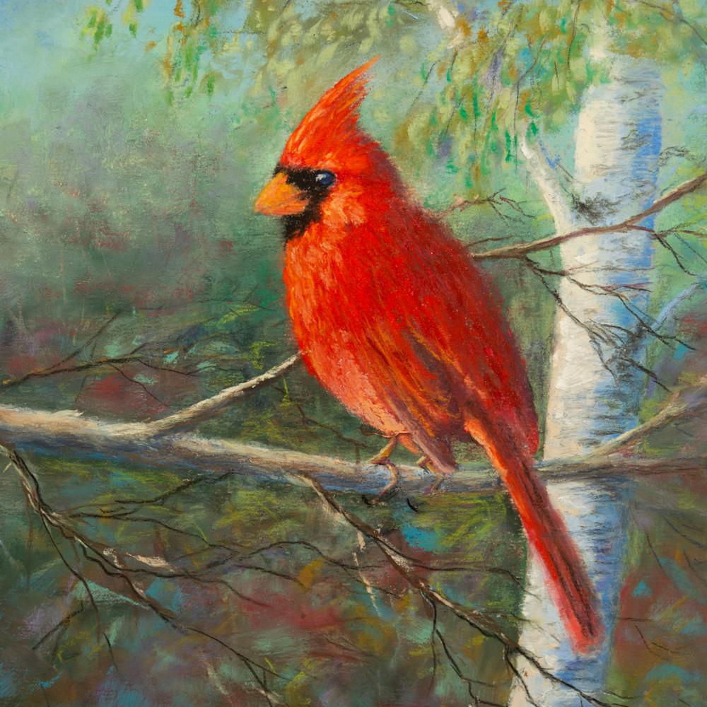 Evening cardinal wovab2
