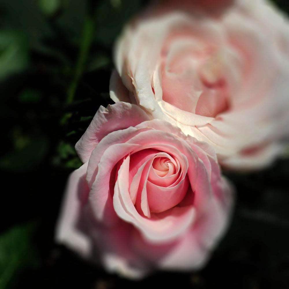 Rose of my heart c5qbtw