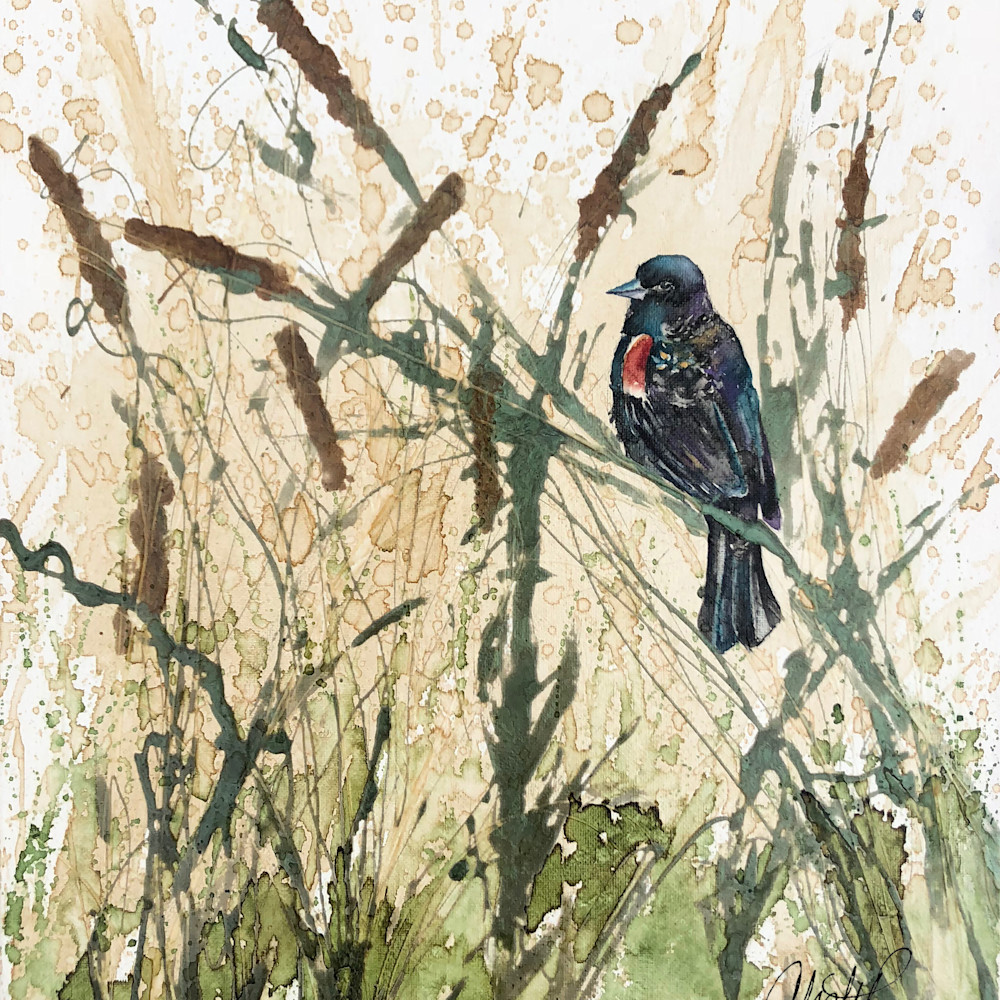 Redwinged blackbird k8v82p