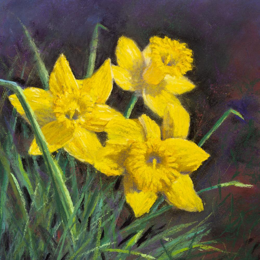 Three little daffodils 2 kqprzw