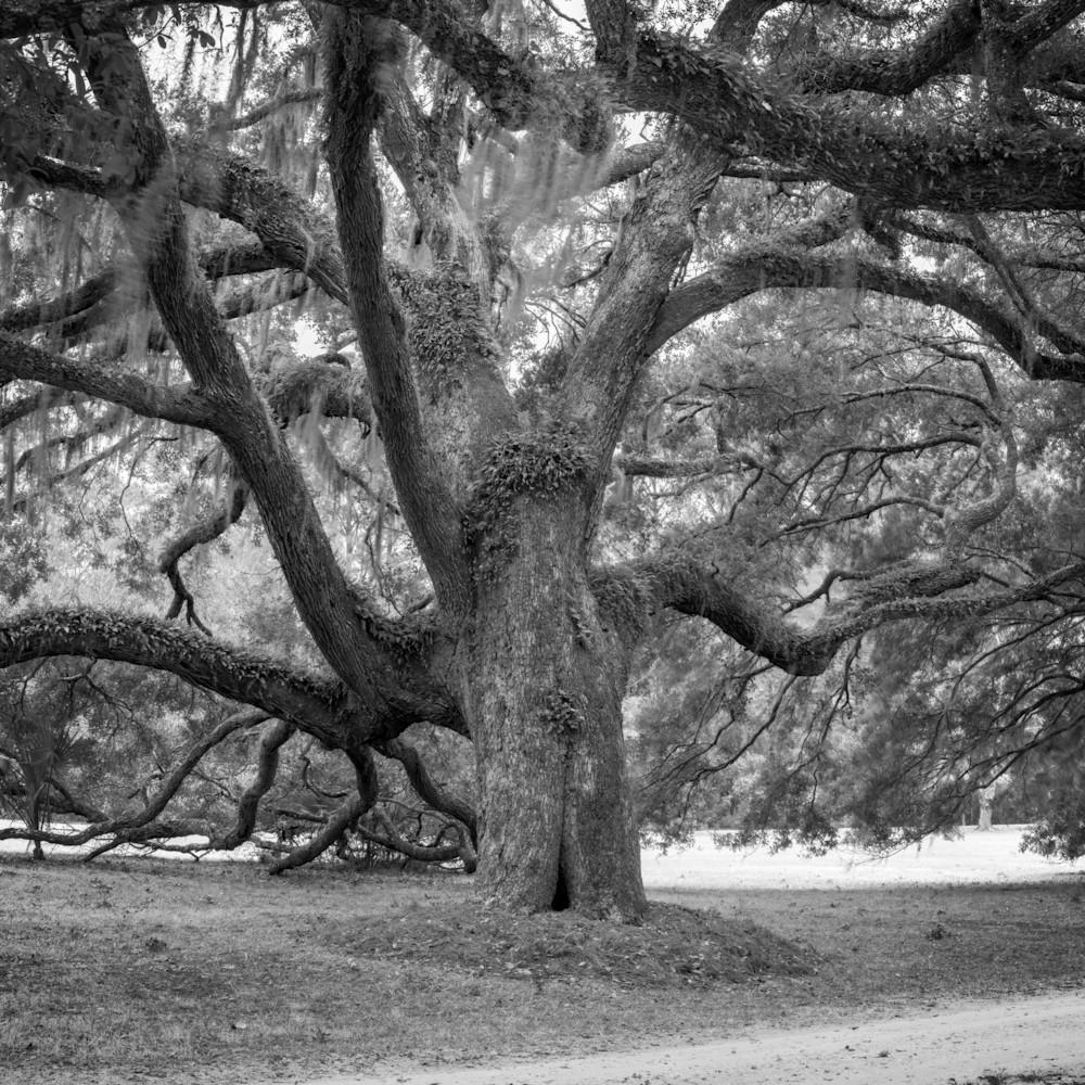 Fowler oaks 20201217 0226 hdr pano lmypir