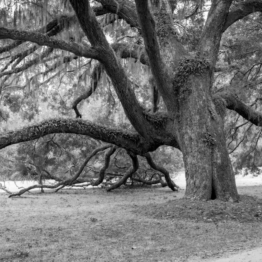 Fowler oaks 20201217 0166 hdr pano pksyj7