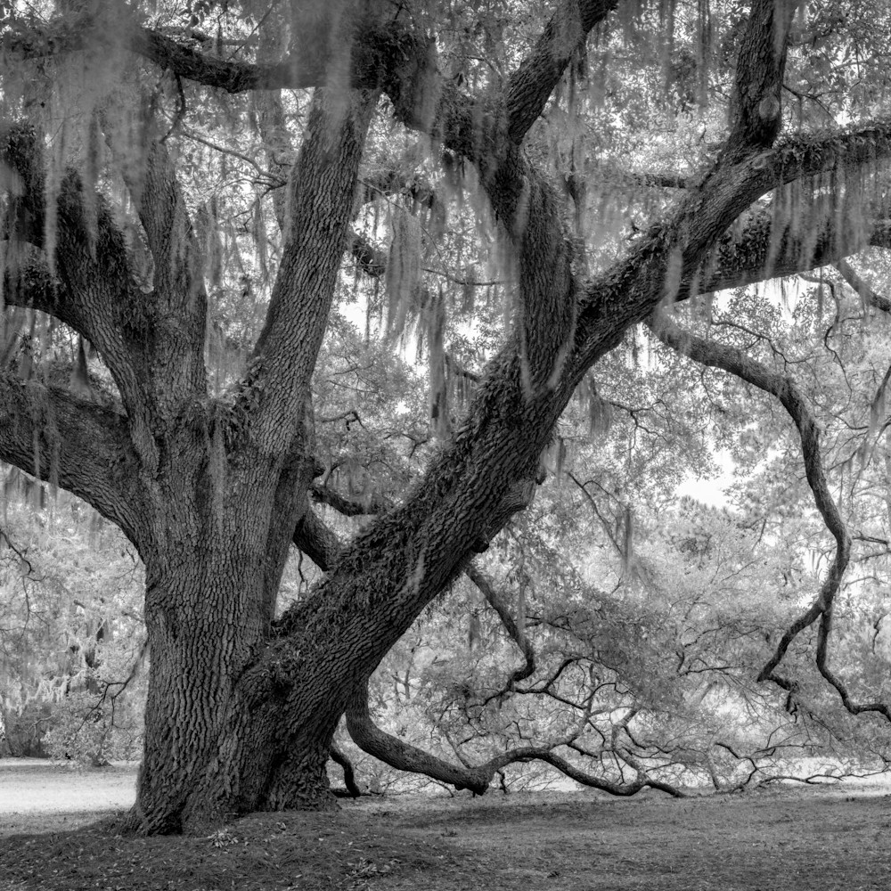 Fowler oaks 20201217 0061 hdr pano pano compress xwkagj