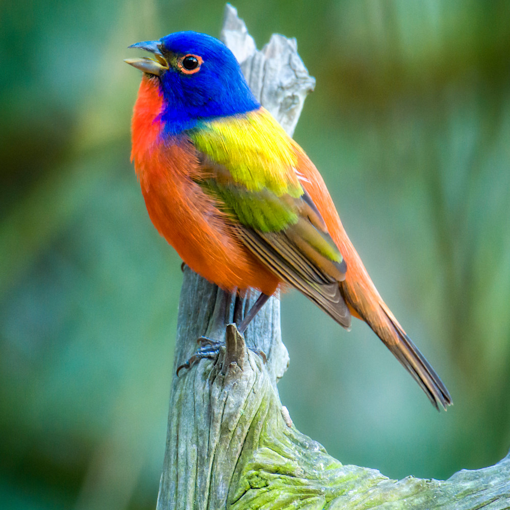 By birds 20210412 0068 xxuzh8