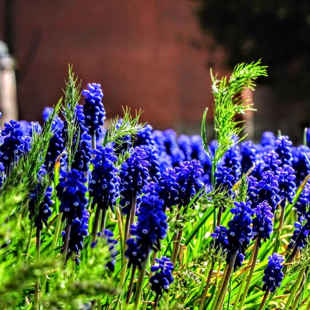 Floralforest slcavenues popmedhighcolormedhigh qshet5
