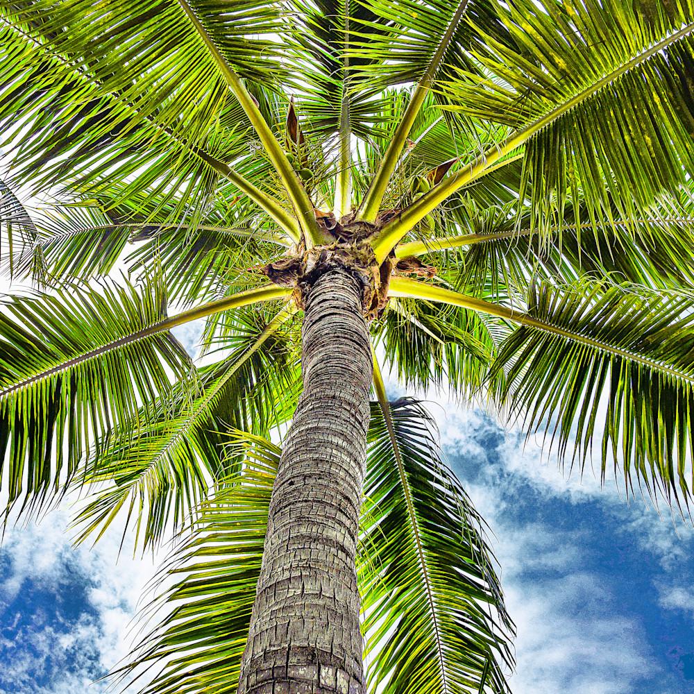 Miami palm suv6vz