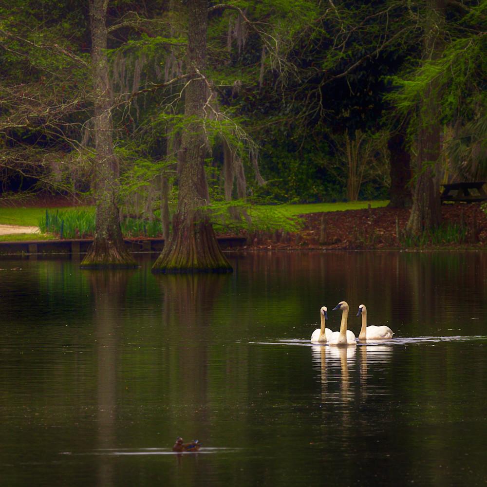 321 swan lake 1096 edit r4ywit