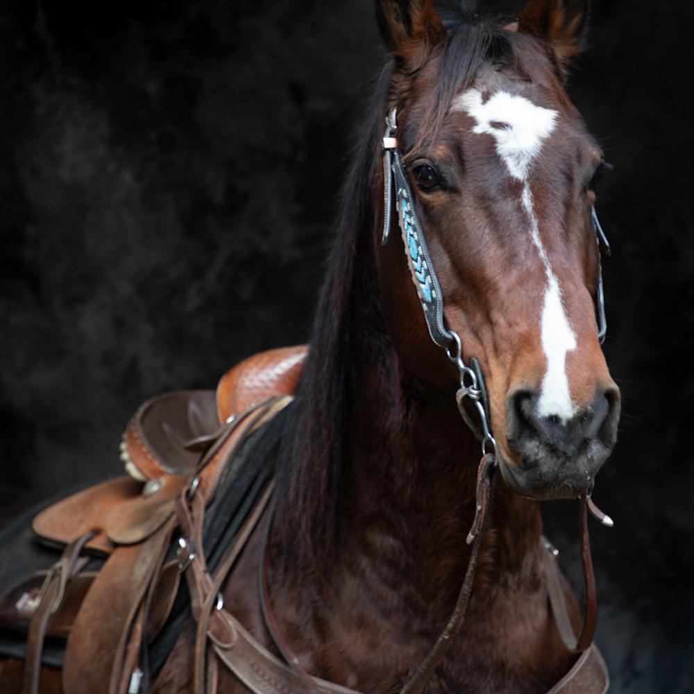Horse portrait rb3b5w