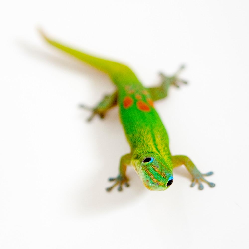 Green gecko 12x16 yczuep