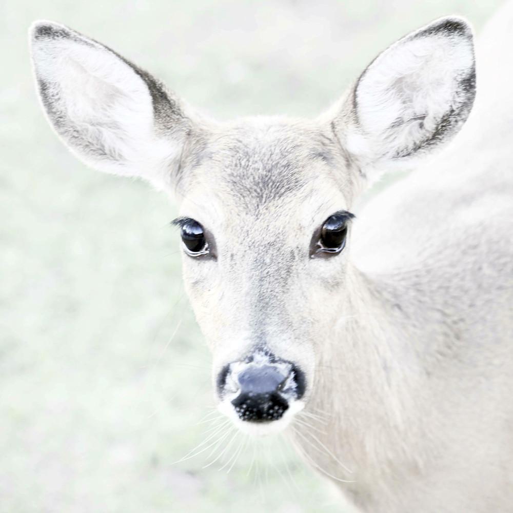 Deer florida d96sdr
