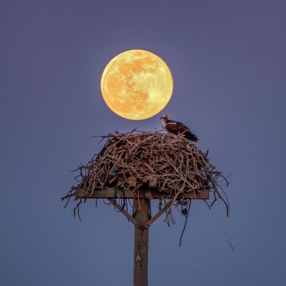 Osprey moon 1 xllnnz