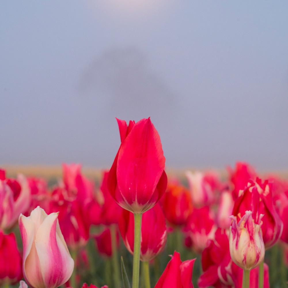 Love under the moonlit sky fm1n0e