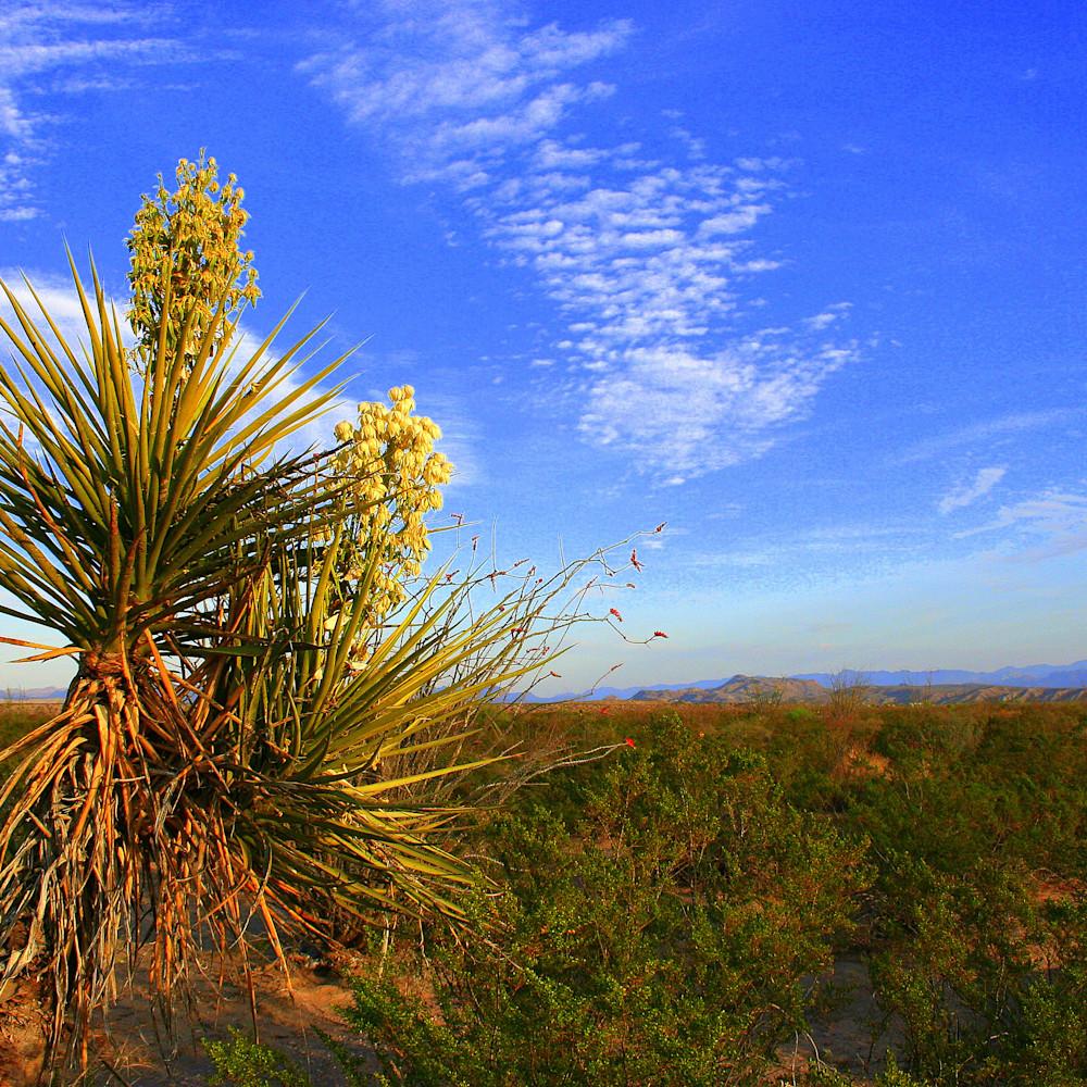 Blooming century plant near presidio texas gj1et7