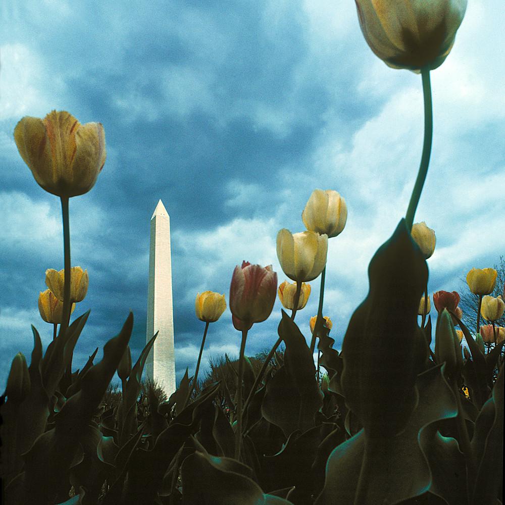 Monumential tulips qndjea