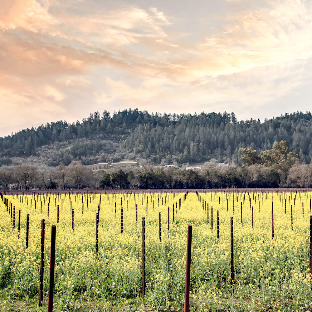 Napa in spring standard scale 2 00x gigapixel isyxg7