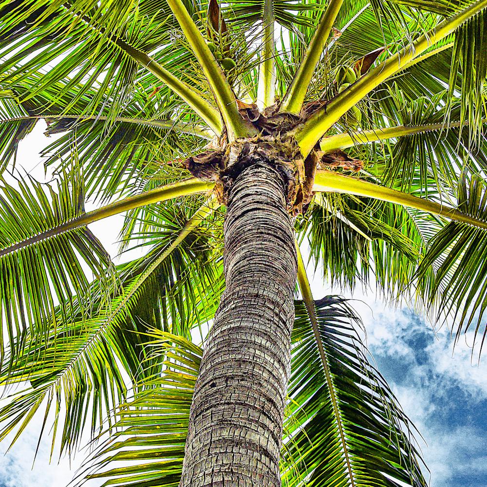 Palm tree detail vertical agvckf