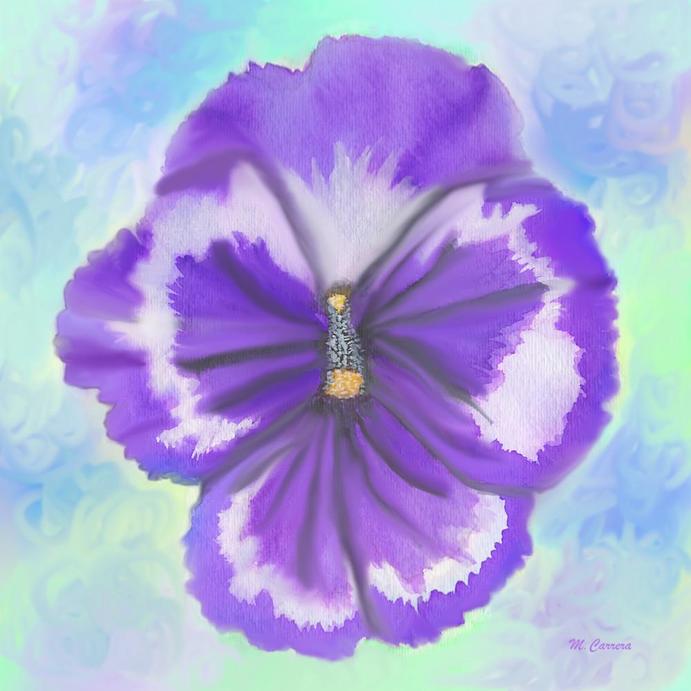 Violet pansy p91xn1