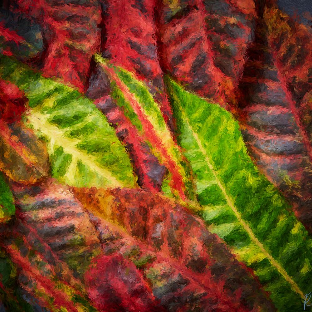 Croton 1 zsb2dw