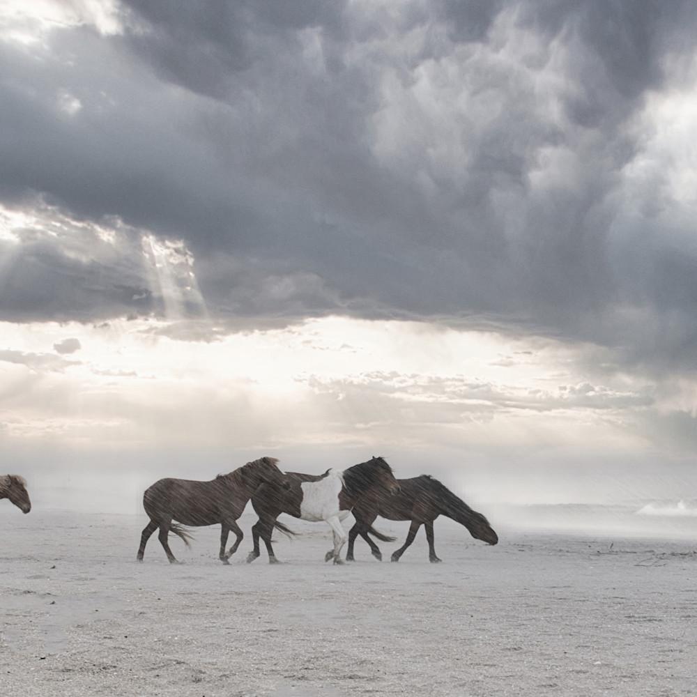 Wild horses of the stormfinal iiwasr