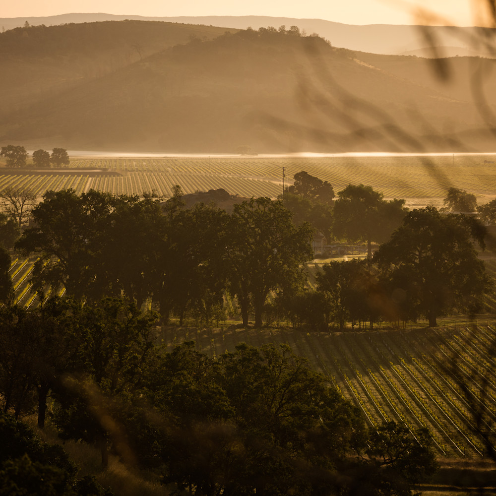 Moody vineyard scene 6404 rlbnww