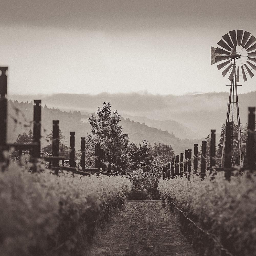 Path windmill vineyard grapevine 7074 ubo2xy