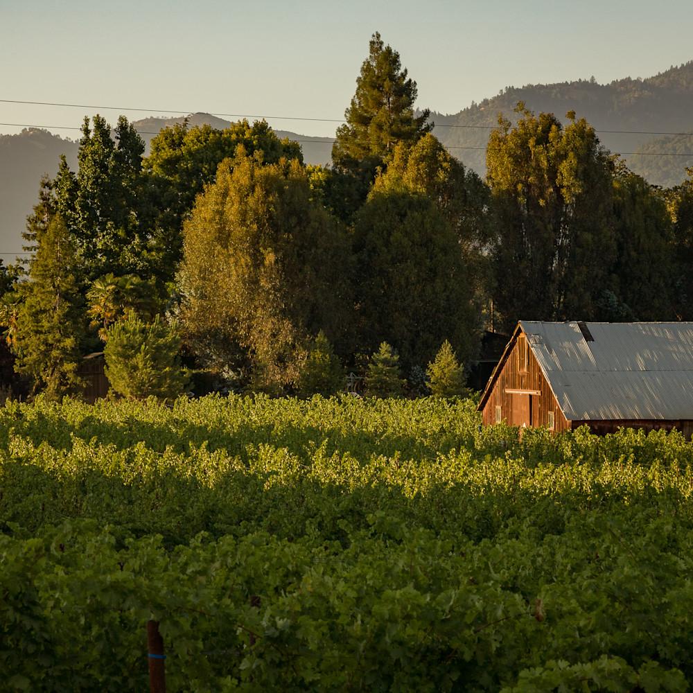 Old vineyard barn napa 4627 qva27t