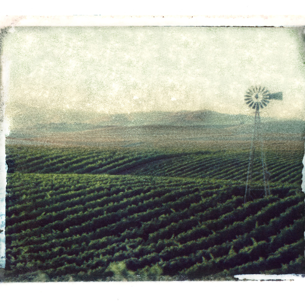 Rolling vineyard hills polaroid 005 c2gun3