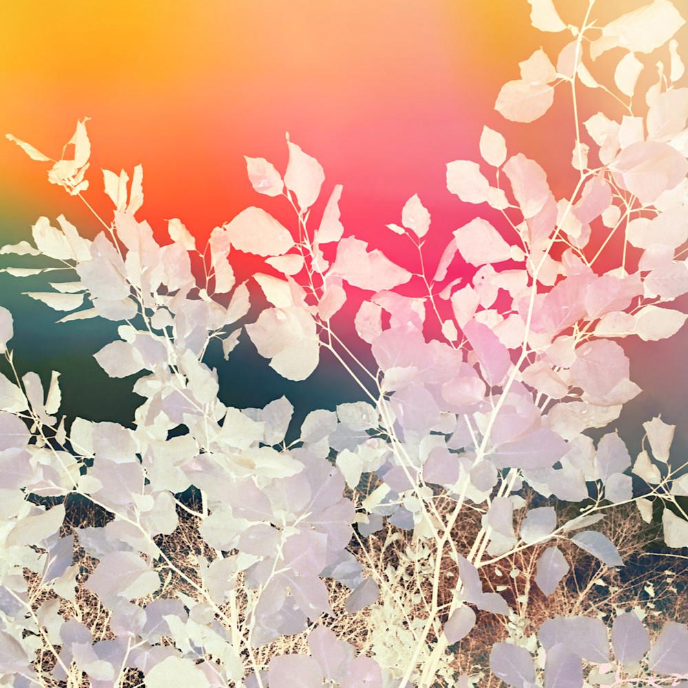 Rainbow sky leafy abstract fhlqbn