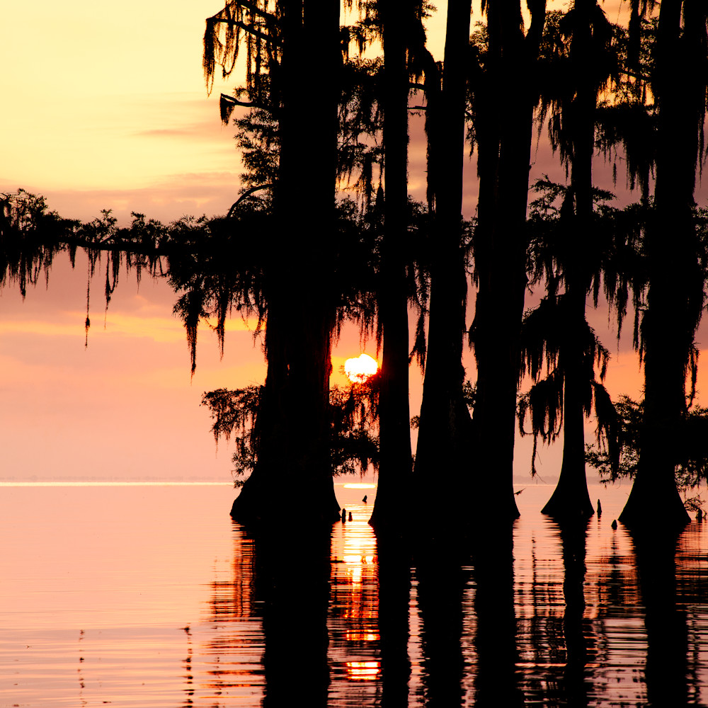 Andy crawford photography sunrise through the cypress upa6ym