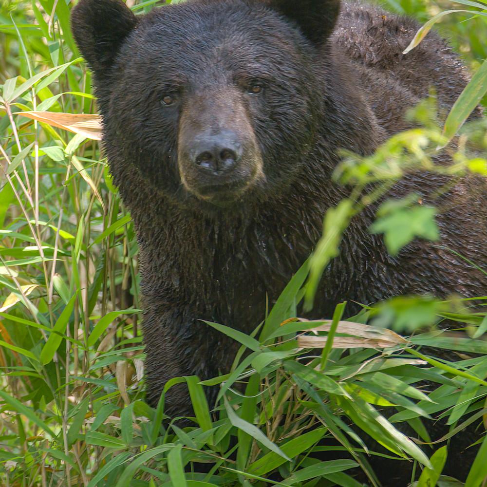Best bear ugna9r