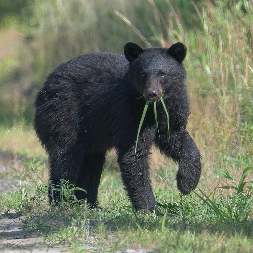 Grass bear lyean7