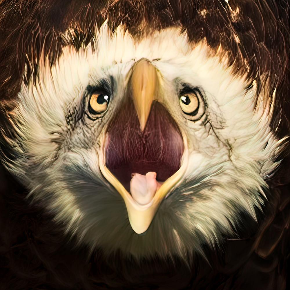 The eagle screams 1 of 1 dvkxec