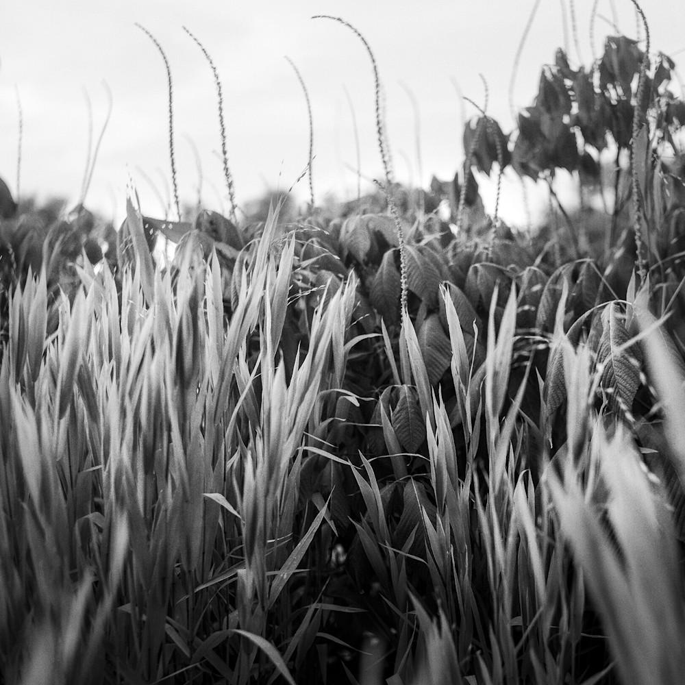 Virginia field cubguj