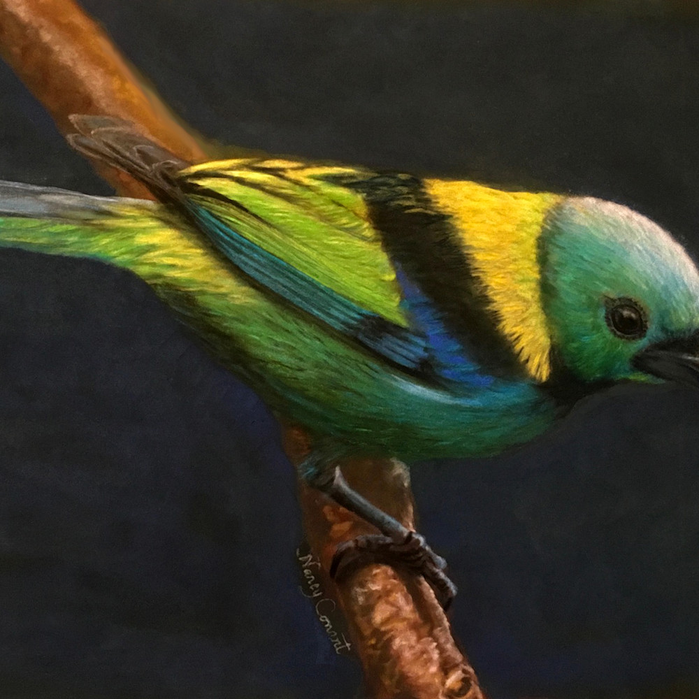 Green headed tanager b83m5a