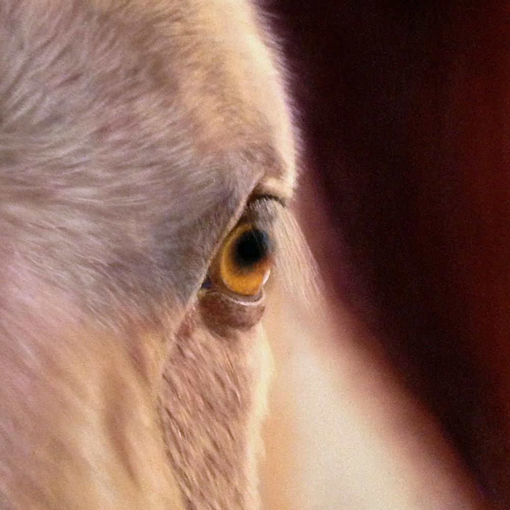 Horse eye fs6ajs