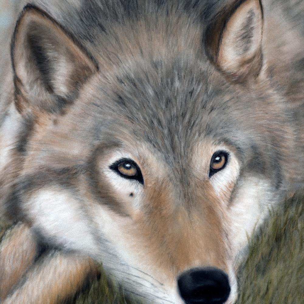 Lobo beasley ync3j2