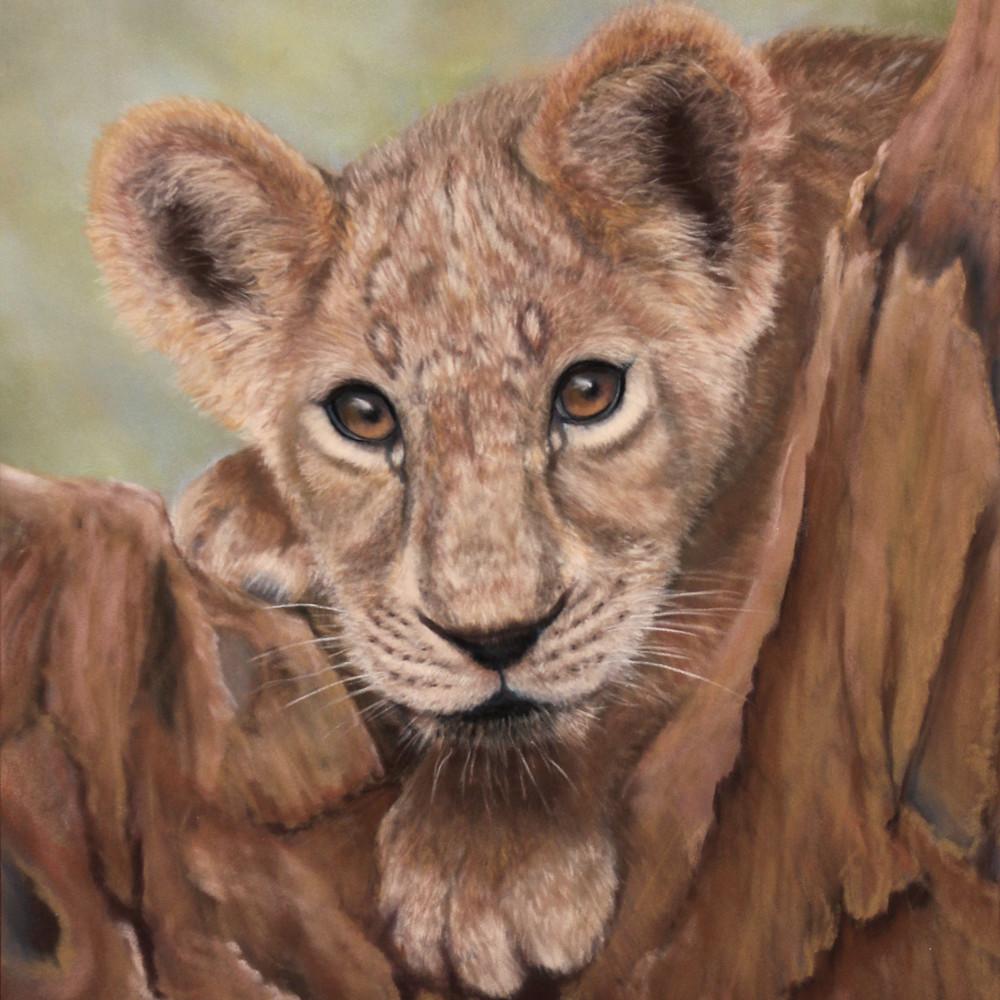 The lion cub xbrj9b