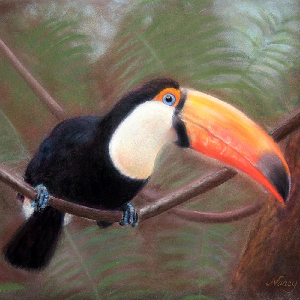 Toco toucan 1 hihb9i