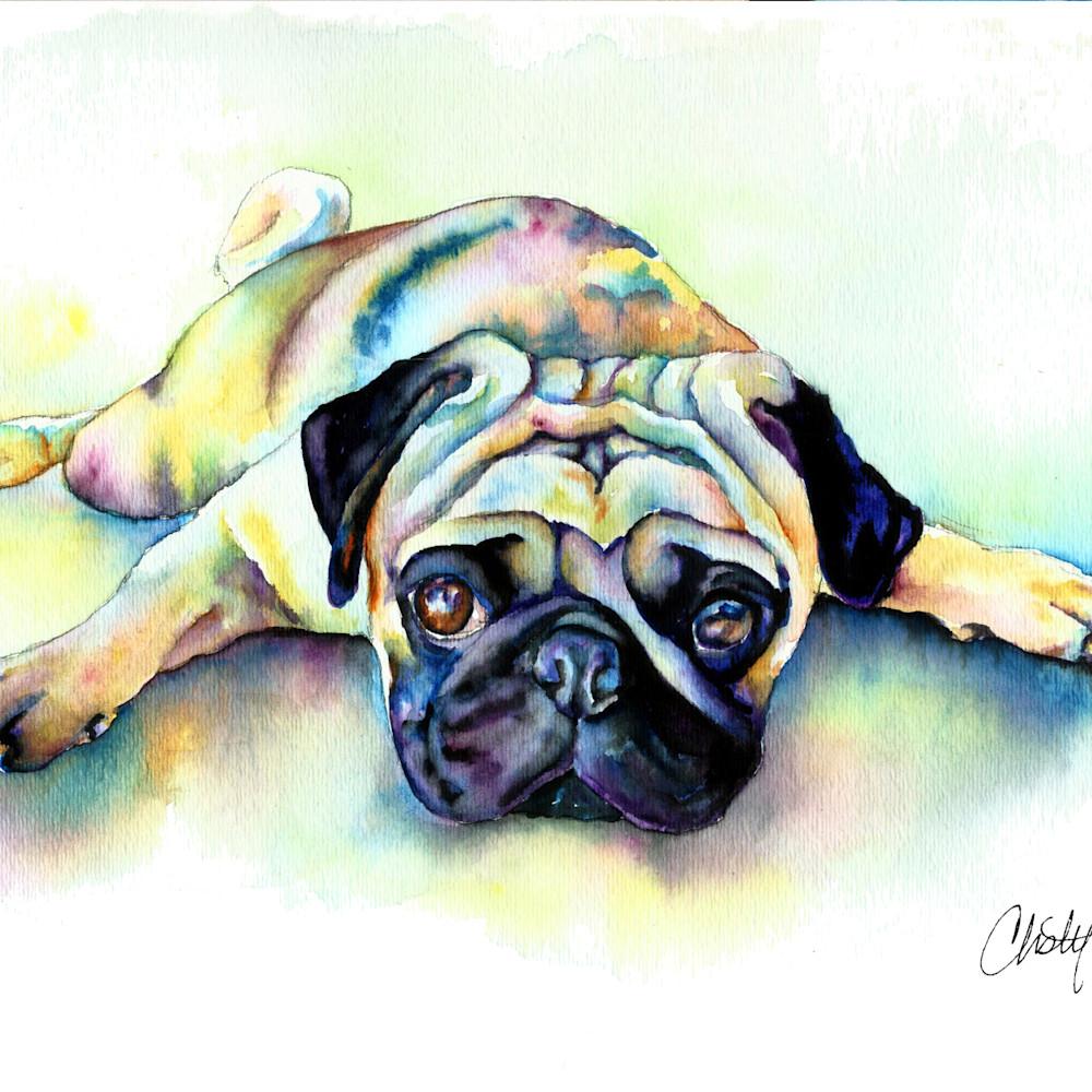 Pug laying flat doj7e9