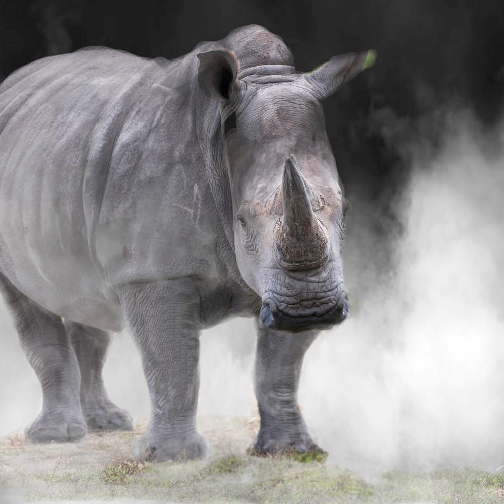 Rhino kjqzed