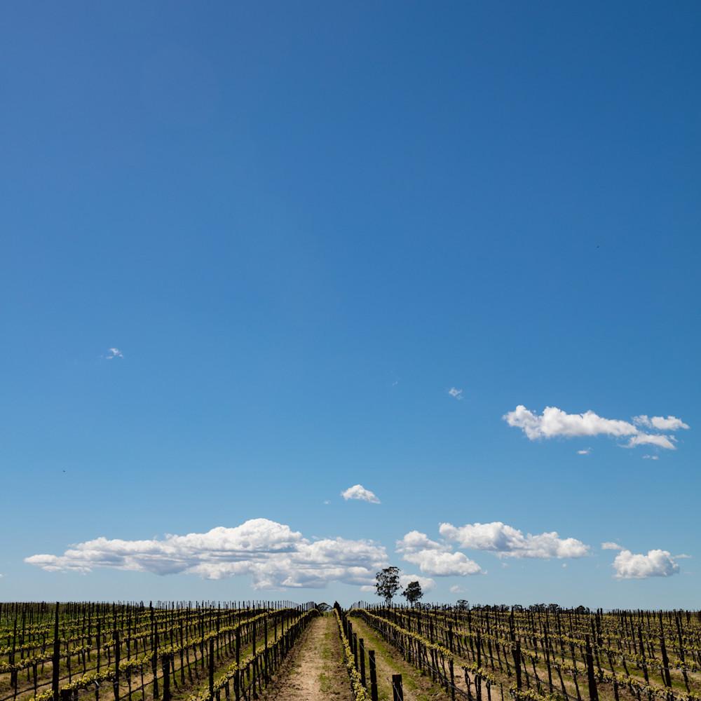 Newly planted napa vineyard 6857 imjvwe