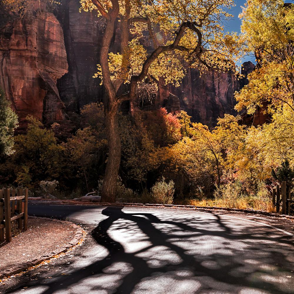 Fall road in zion ekicny
