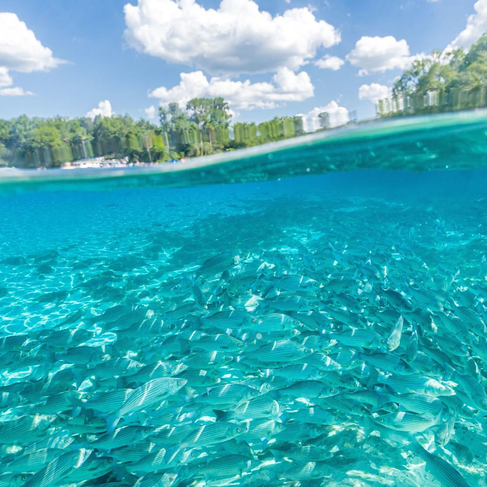 Silver springs underwater  27 inldvl
