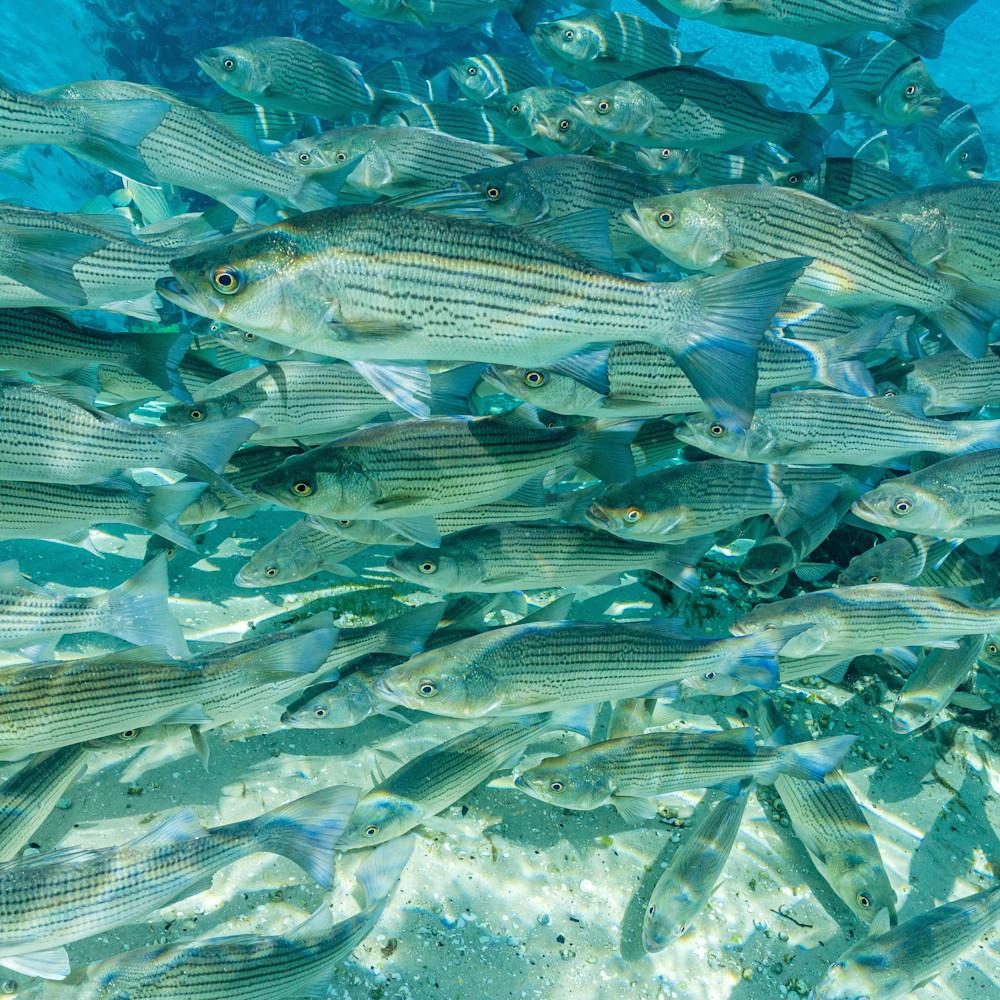 Silver springs underwater 0290 ttounz