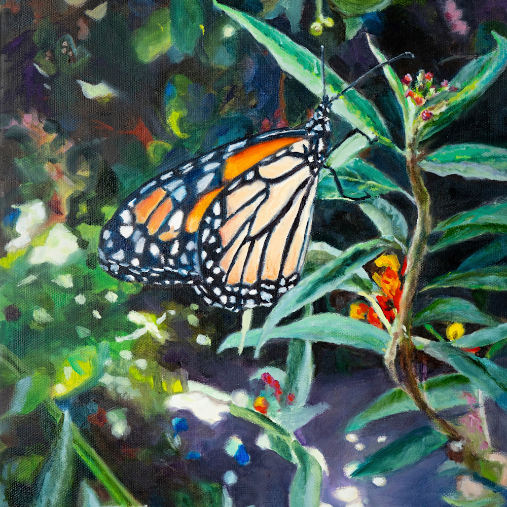 Butterfly 8x10 dgffut