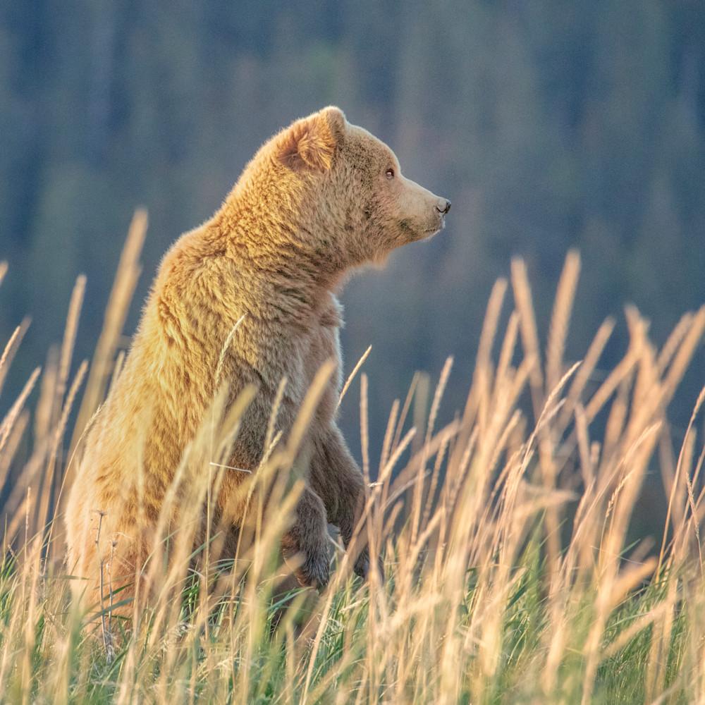 Bearstandinggrass 0w5a7048 p36e9q